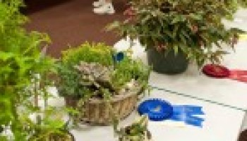 Horticulture show, contest again to be featured at Festival of Flowers