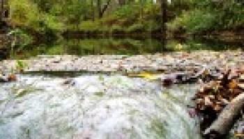 Sept. 11 Texas Watershed Steward training in Lockhart to focus on Plum Creek