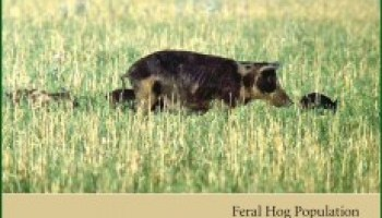 New feral hog publication strives to set the record straight on accurate numbers