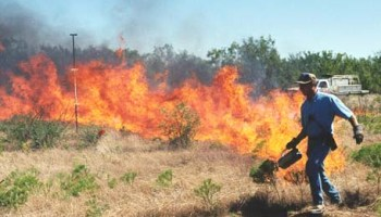 Prescribed burns may need to include both summer and winter fires AgriLife Research determines best combination for grass regrowth