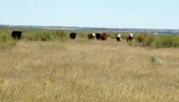Texas Hill Country Range Management Workshop set for July 10 in Leakey