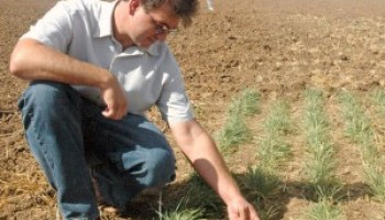 AgriLife Research associate recognized for integrated pest management work