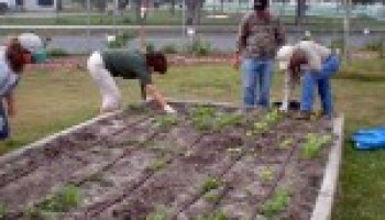 Guadalupe County Master Gardener class open for registration