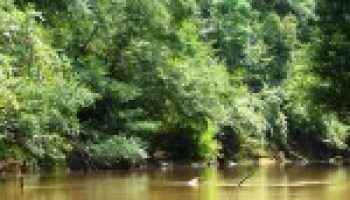 March 7 meeting in Nacogdoches will focus on Attoyac Bayou usage survey