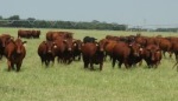 Multi-county Beef Cattle Field Day slated for May 24 in Martinez
