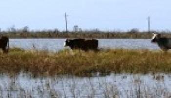 AgriLife Extension offers new hurricane preparedness materials