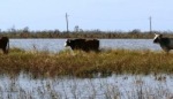 AgriLife Extension promoting hurricane preparation for livestock, equine owners