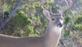 Multi-County Wildlife Management Workshop slated for Oct. 17 in Luling