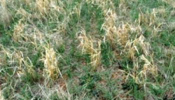 Soil management seminar set for April 4 in Amarillo