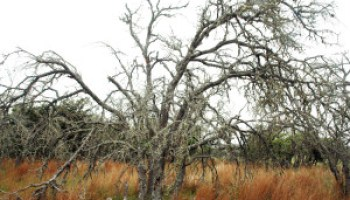 Landowners offered educational opportunity on various 'invaders' on the Edwards Plateau
