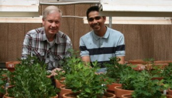 Peanut breakthrough involved Texas A&M AgriLife scientists