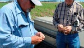 Combined Vegetable and Wheat Field Day set for May 18 in Uvalde