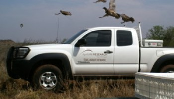Quail research ranch field day Sept. 26 to open on optimistic note