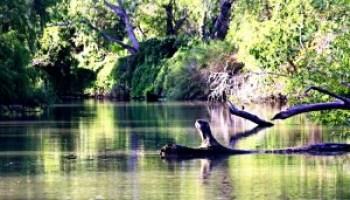 Water quality training Dec. 4 in Corpus Christi will focus on Oso Creek, Oso Bay