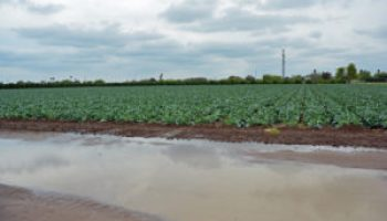 AgriLife Extension experts: Rains 'mixed blessing' for South Central Texas, Winter Garden producers