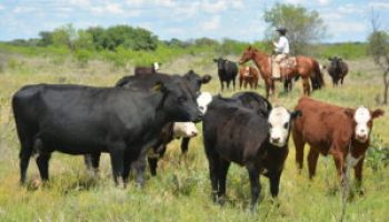 AgriLife Extension, Texas Beef Council to conduct Beef 706 program in Alpine