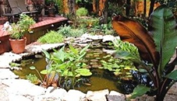AgriLife Extension, others to offer Saturday Summer Seminars at Zilker Botanical Garden