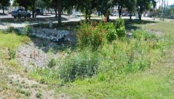 Rain garden retention/detention pond program to be held July 22 in Dallas