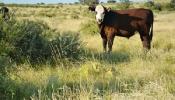 Big Country Beef Conference set Aug. 20 in Abilene