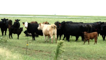 Cattle Trails Cow-Calf Conference set for Dec. 3 in Wichita Falls