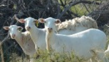 Range and Pasture Workshop set for Dec. 3 in Eldorado