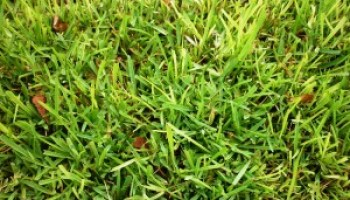 Lawn maintenance, water conservation focus of March 10 program in Austin