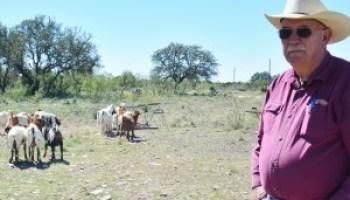 Super Juniper Eating Goat Project melds genetics, technology to manage plant pest