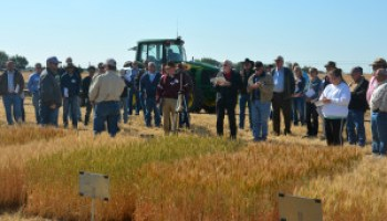 Texas A&M AgriLife spring field day set May 4 at Chillicothe