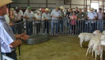 'Back by popular demand,' two major sheep, goat events return to San Angelo this summer