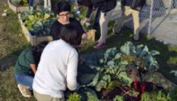 AgriLife Extension Learn, Grow, Eat and Go! teacher training June 28 in Hallsville