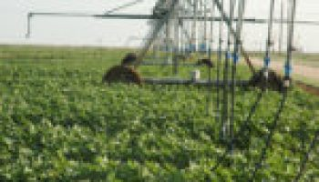 Maverick County Agricultural Irrigation Field Day set Sept. 13 in Eagle Pass