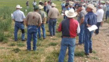Concho, McCulloch counties set annual Millersview wheat tour for May 4