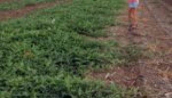 New 4-H program sponsorship focused on plant, soil science