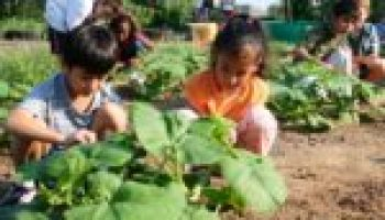 Junior Master Gardener Adult Leader Training to be July 26-28 in San Antonio