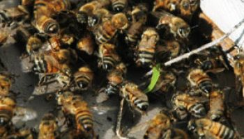Beekeeping workshops offered July 24-26 in Perryton