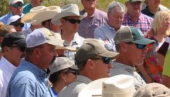 AgriLife Extension Statewide Quail Symposium Aug. 16-18 in Abilene