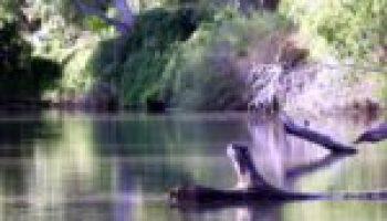 Riparian, stream ecosystem workshop set Oct. 3 in Robstown