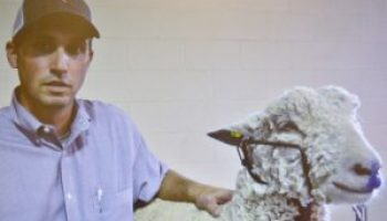AgriLife Extension publishes sheep, goat how-to validation YouTube video series