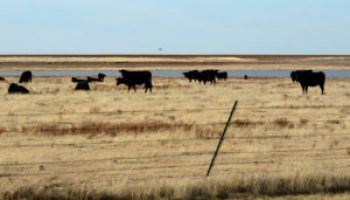 Deadline for Pasture, Range and Forage Insurance sign-up Nov. 15