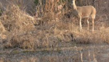 Multi-county Wildlife Management Field Day set Oct. 26 at Sonora AgriLife Research Station