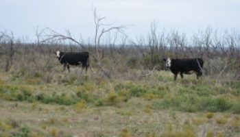Cattle Trails Cow-Calf Conference set Dec. 1 in Wichita Falls