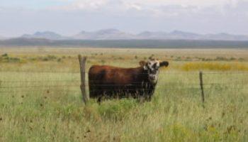 Southwest Beef Symposium set Jan. 17-18 in Odessa
