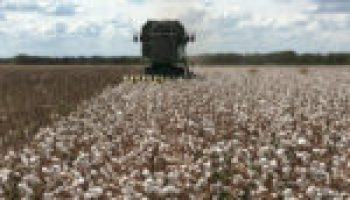 Cotton, grain pre-plant conference and producers meeting slated for Jan. 16 in Mercedes
