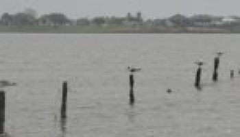 Institute to hold third meeting on improving Carancahua Bay water quality