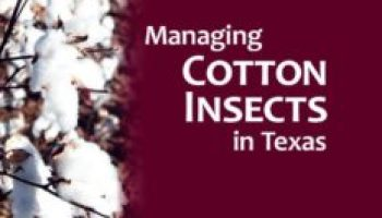 New AgriLife Extension statewide cotton pest management guide is now available