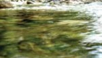Water quality training April 12 will focus on Brady Creek watershed