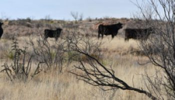 Hemphill County beef conference April 24-25 to address drought, environmental conditions