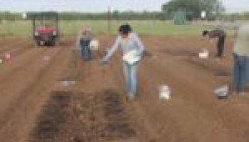 AgriLife Research study examines humic substances as soil amendment