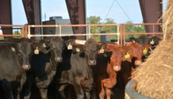 2018 Burleson County Beef Tour April 26 in Caldwell