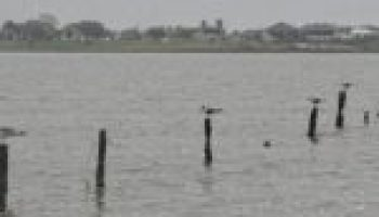 Institute to hold meeting on improving Carancahua Bay water quality